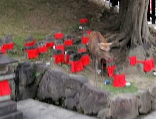 Japan 2010 272