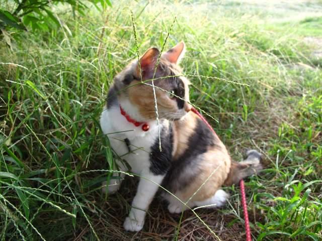 人形招き猫 みこちゃん 101