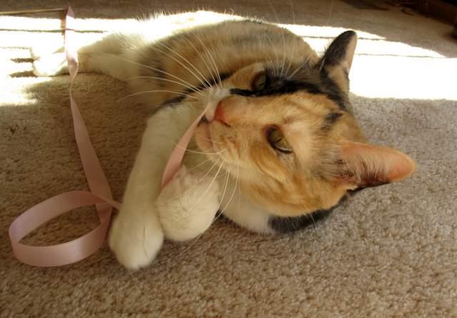 さん猫やしき 084-1