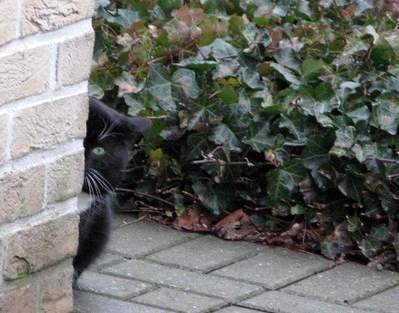 エツコの園 猫やしきさんちのお外の子-1