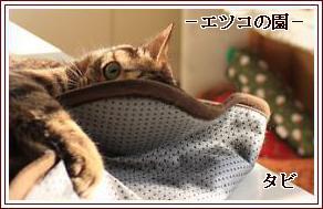 タビちゃん