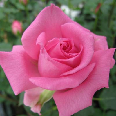 NAVER まとめ綺麗な花の画像