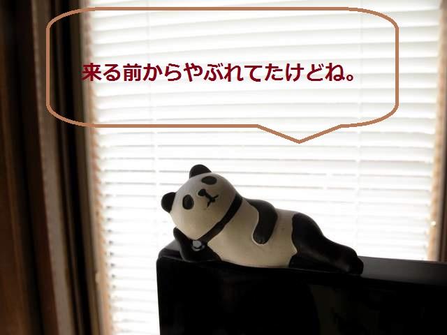パンダ いくぱん説