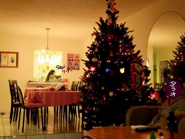 2011-12-01maiami tree
