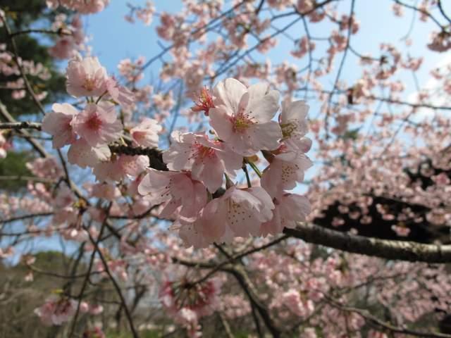 04-12 Japan 822
