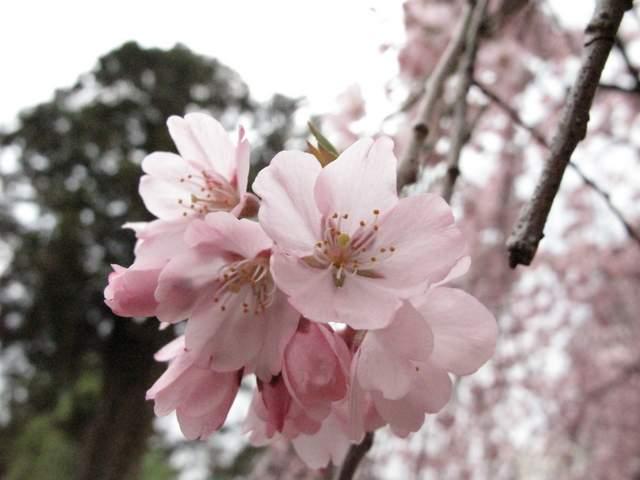 04-12 Japan 989