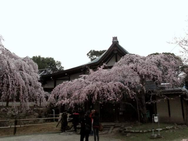 04-12 Japan 984