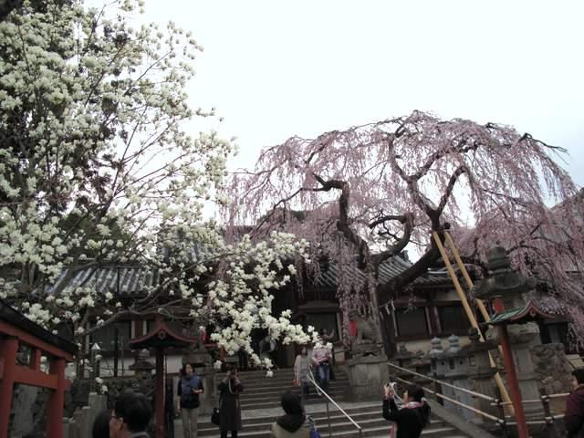 04-12 Japan 1012