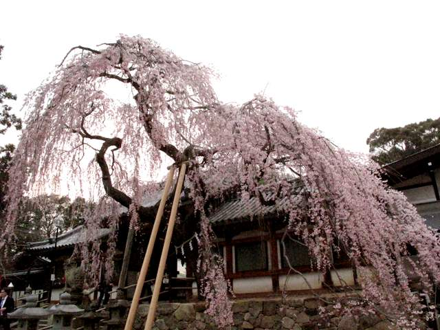 04-12 Japan 993