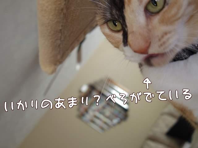 4MaXu.jpg