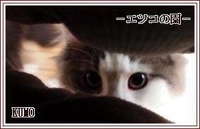 KUMO-1.jpg