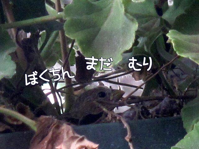 M_J6h.jpg