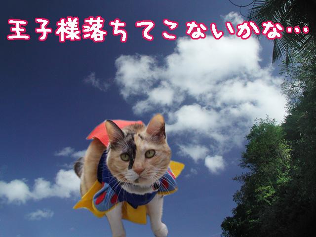 hime_negai.jpg