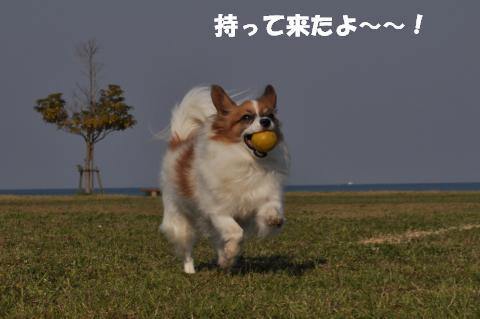 CSC_0220_convert_20130417122929.jpg