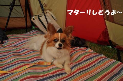 DSC_0061_convert_20130508131856.jpg