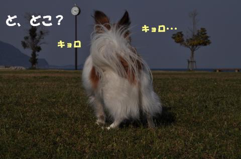 DSC_0095_convert_20130417124256.jpg