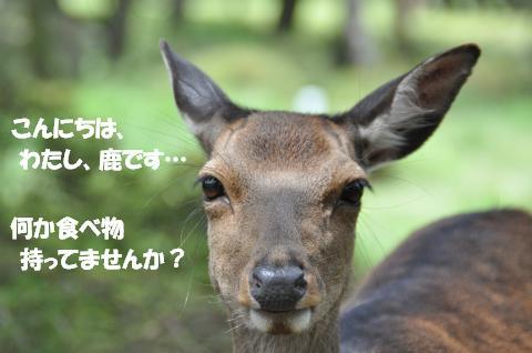 DSC_0119_convert_20130720111054.jpg