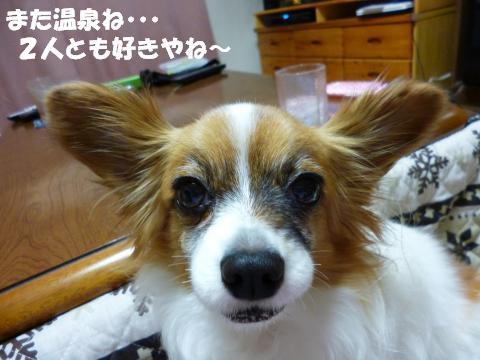 P1000377_convert_20130208153351.jpg