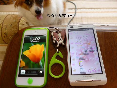 P1000966_convert_20130318101712.jpg