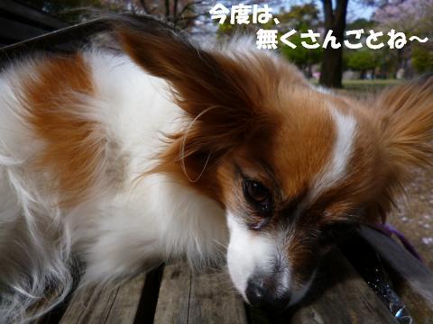 P1010130_convert_20130408130119.jpg