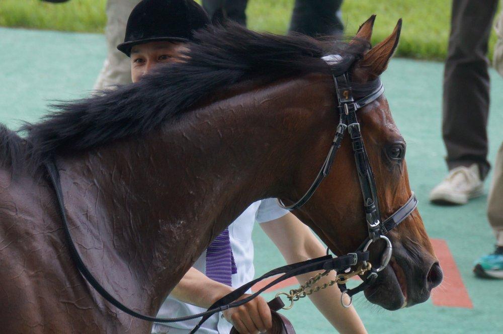 エルノルテ 新馬勝ち ウィナーズサークル