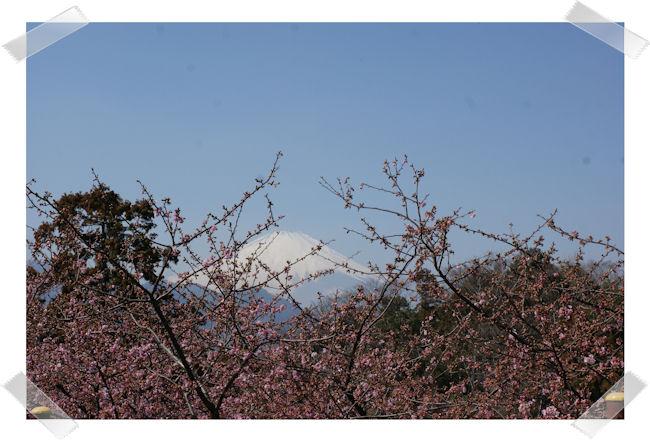 DSC04405-sakura.jpg