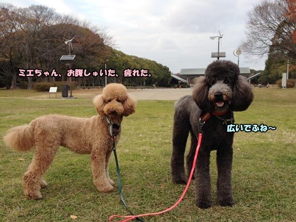 IMG_404920131209.jpg