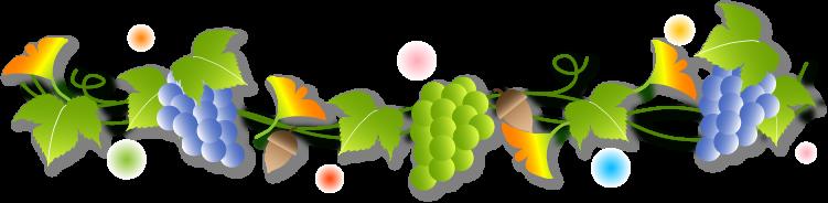 ライン葡萄2