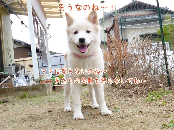 20121222_3_1.jpg