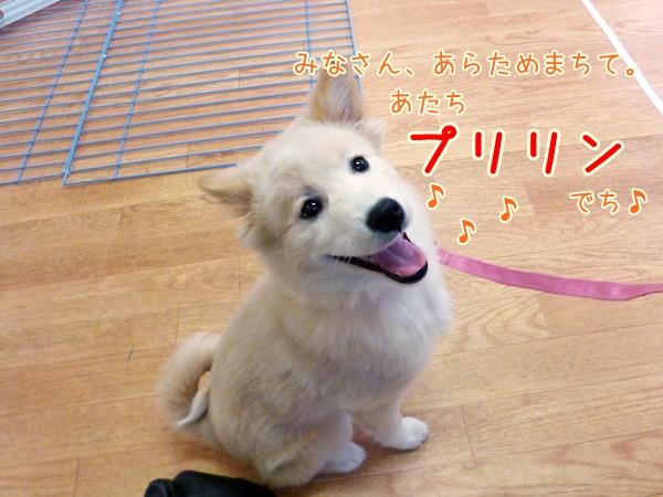 20121229_1_1.jpg
