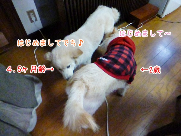 20130201_2.jpg