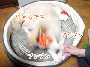 20130204_5.jpg