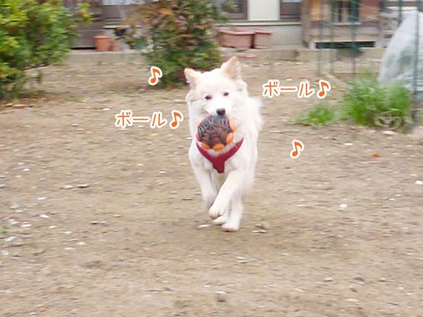 20130213_1_1.jpg