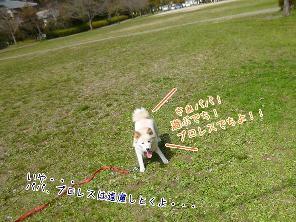 20130317_1.jpg
