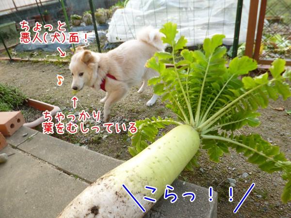 20130323_4.jpg