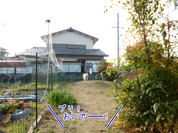 20130328_1.jpg