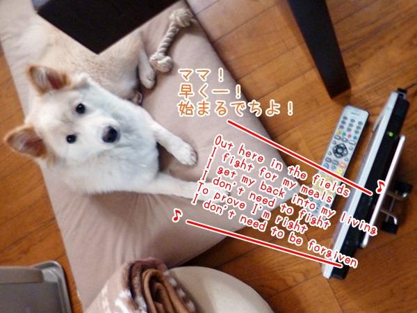 20130416_1.jpg