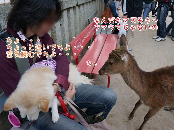 20130510_19.jpg