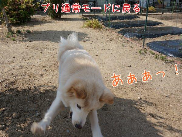 20130518_5.jpg