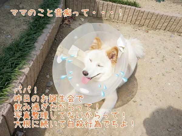 20130526_6.jpg