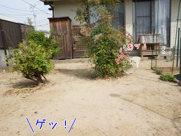 20130530_5.jpg