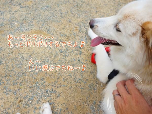 20130704_8.jpg
