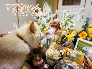 20130709_5.jpg