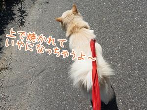 20130713_3.jpg