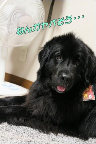 2011_0811atukute0010.jpg