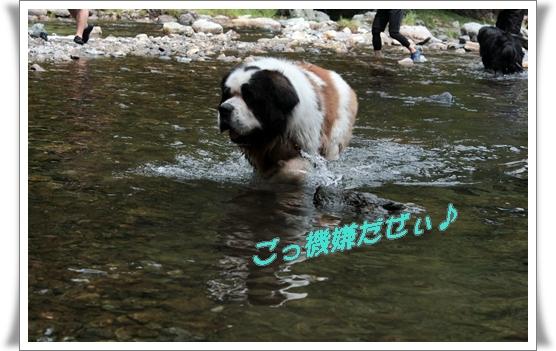 2011_0817kawaasobi0020.jpg