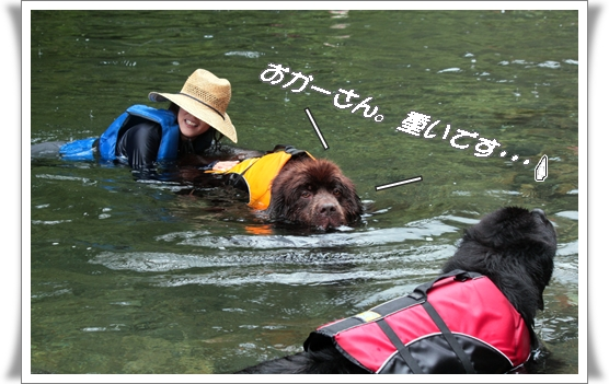 2011_0817kawaasobi0126.jpg