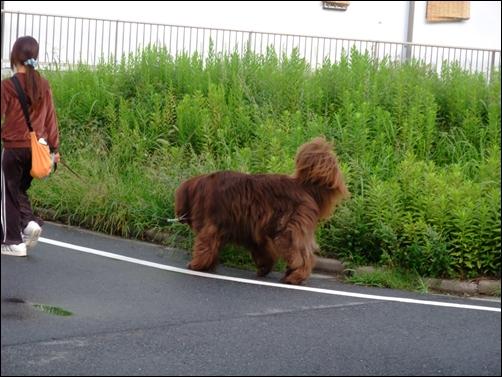 2011_0925asanokouen0001.jpg