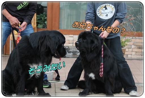 2011_1029sumabaron0023.jpg