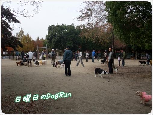 2011_1127dogrun0002.jpg